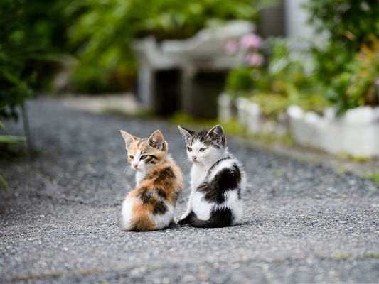 click to free download the wallpaper--Wallpapers for Computer Free, Two Cats Outdoor, Young Fellows