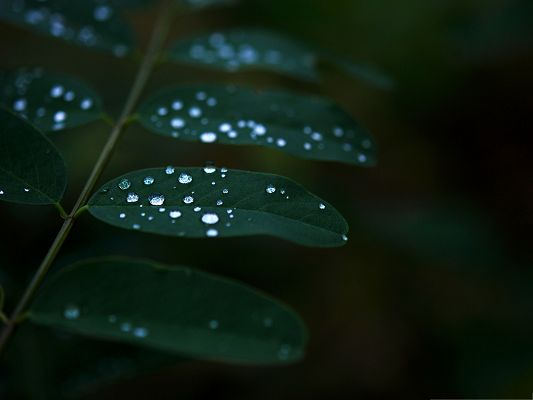 Wallpapers for Computer Free, Water Dew On Dark Green Leaves
