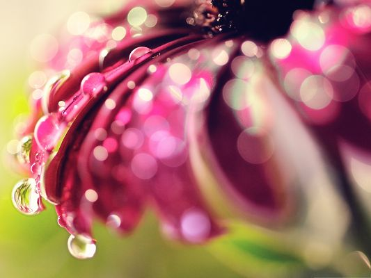 click to free download the wallpaper--Water Drops Bokeh, Water Drops on Pink Flower, Fresh and Clean Scene