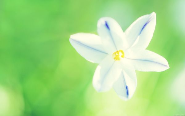 White Flower Photography, White Blooming Flowers on Green Background, Fresh and New