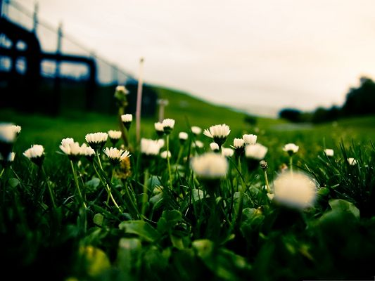 White Flower Photos, Small Flowers in Bloom, Green Grass Beneath