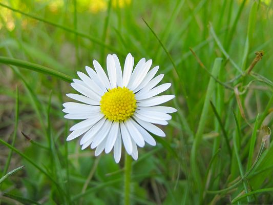 White Flowers Picture, Small and Pure Flower Around Green Grass, Nice in Look
