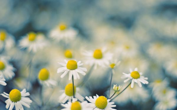 White Flowers in Full Bloom, the Scenes Fit the Visional Theory, Enjoyable and Pleasant to See - HD Creative Wallpaper