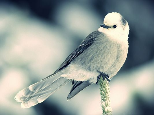 click to free download the wallpaper--White Little Bird Picture, Little Bird Standing on a Green Plant, Patient Wait