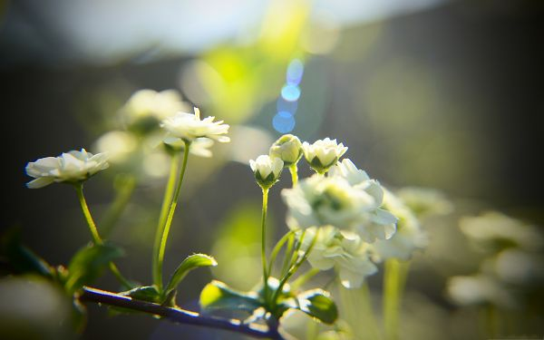 White Little Flowers, Smiling Flowers Under the Sun, Amazing Scenery