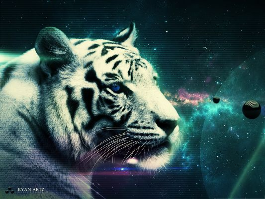 click to free download the wallpaper--White Tiger Image, Attentive Tiger Looking at the Planets, Great Look