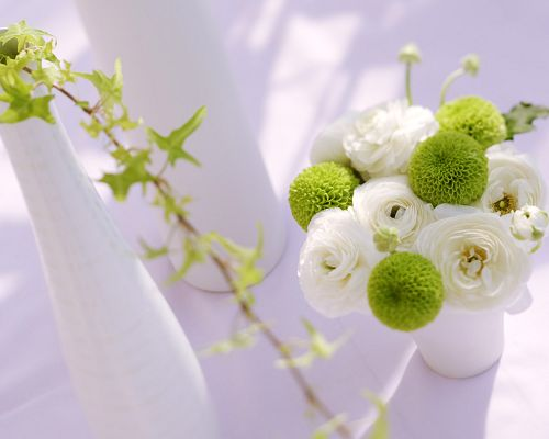 White and Green Flowers, You Feel Great Freshness and Clearness, is Such a Good-Looking and Pleasant Scene - Indoor Scenery Wallpaper