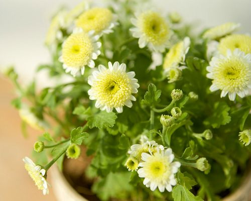 click to free download the wallpaper--White and Yellow Flowers, All Cute and Little, Accompanied by Green Grass, They are Happy Enough - Indoor Scenery Wallpaper