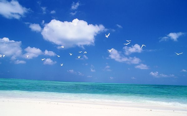 Wide and Blue Sea, Seas Birds Flying Over, Things Are Simple and Clear - High Resolution Sea Wallpaper
