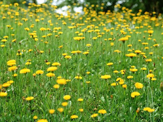 click to free download the wallpaper--Wild Flower Photos, Yellow Blooming Little Flowers, Green Scene