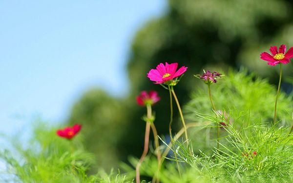 click to free download the wallpaper--Wild Flowers Photography, Pink Blooming Flowers Among Green Plants