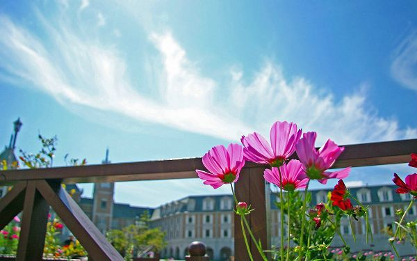 click to free download the wallpaper--Wild Flowers Photography, Pink Flowers Under the Blue Sky, Incredible Look