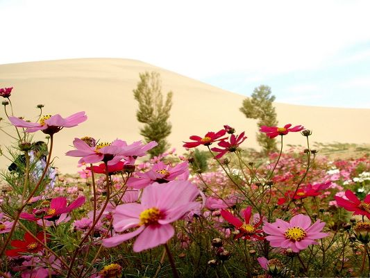 Wild Flowers Picture, Pink and Red Flowers in Bloom, Yellow Sand, Amazing Scene