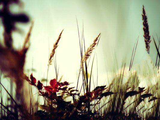 click to free download the wallpaper--Wild Grass Photos, Wild and Prosperous Plants in Good Growth