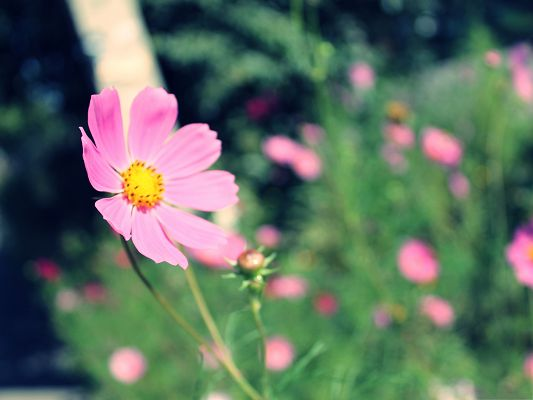 click to free download the wallpaper--Wild Pink Flowers Photo, Blooming Flower Under Micro Focus, Great Nature Landscape