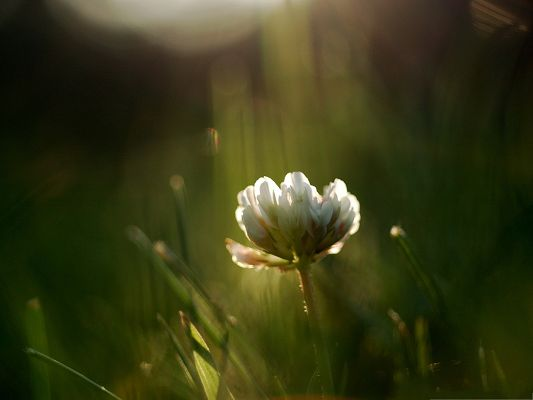 click to free download the wallpaper--Wild White Flower Photography, White and Blooming Flowers Under the Sunlight