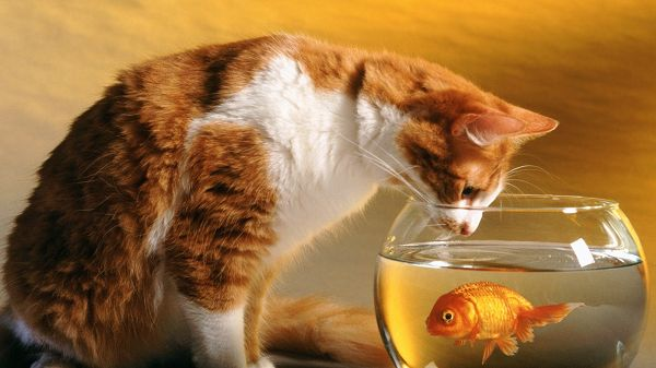 Wondering How to Get the Fish, Is She Planning to Drink the Bottle up? Turn to a More Practical Way - Cute Kitty HD Wallpaper