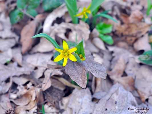 Yellow Blooming Flower, Little Flowers on Gray Leaves, Amazing Scenery
