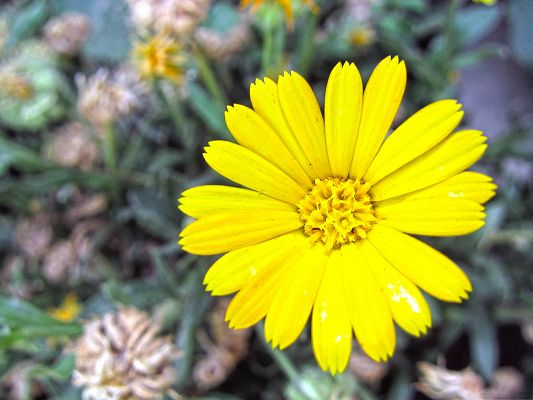 Yellow Flower Image, Tiny Flowers with Long Petals, Green Grass and Leaves Around