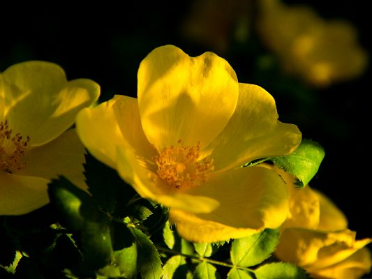 Yellow Flowers Image, Little Flower in Bloom, Green Leaves, Great Combination