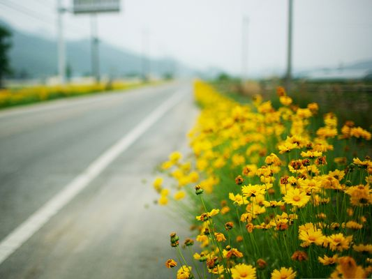 click to free download the wallpaper--Yellow Flowers Photography, Little Blooming Flowers Along the Road