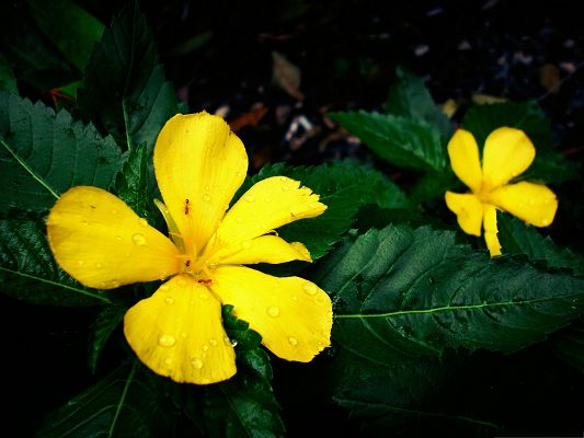 click to free download the wallpaper--Yellow Flowers Picture, Beautiful Flower in Bloom, Green Leaves Beneath