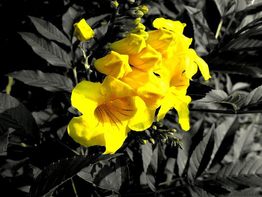 click to free download the wallpaper--Yellow Flowers Picture, Beautiful and Blooming Flower Around Black Leaves