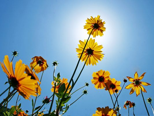 click to free download the wallpaper--Yellow Flowers Picture, Blooming Little Flower Under the Blue Sky, Amazing Scenery