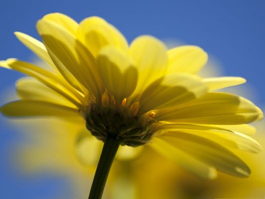 click to free download the wallpaper--Yellow Flowers Picture, Golden Flower Under the Blue Sky, Incredible Look