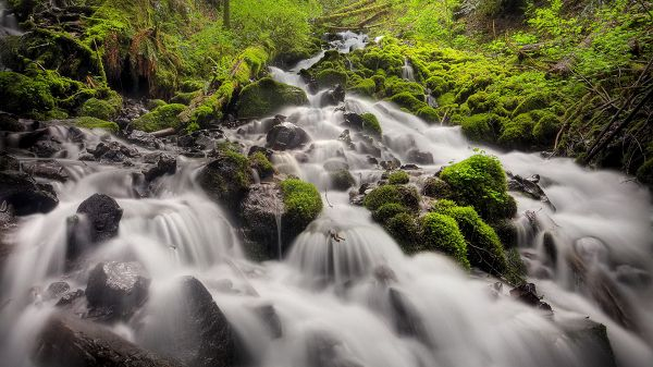 click to free download the wallpaper--beautiful nature wallpaper - A Waterfall in Rapid Flow, Green and Natural Plants Alongside
