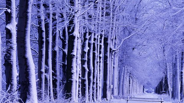 beautiful nature wallpaper - Snowy White World, Being Outdoor is a Must