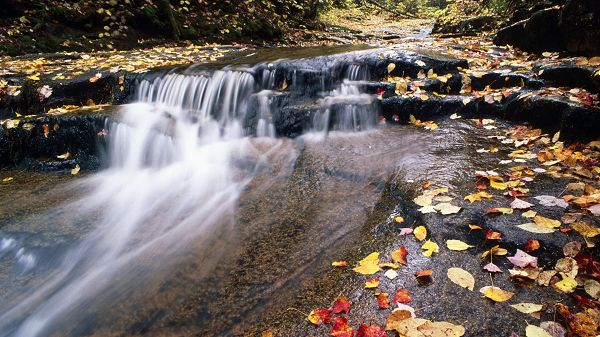 beautiful nature wallpaper - Yellow and Fallen Leaves Among Rapid-Flowing River, Great Beauty of Nature