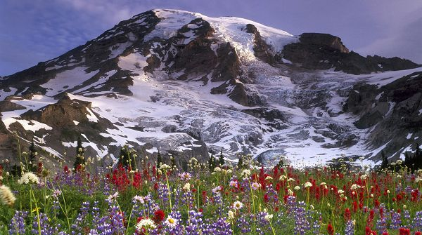 beautiful pictures of nature - Snow-Capped Mountains, Blooming Flowers in Various Color, What a Scene!
