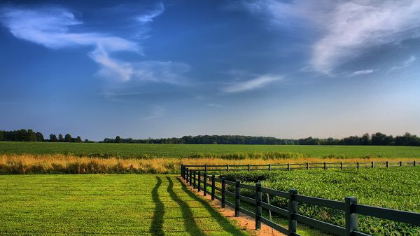 click to free download the wallpaper--beautiful scenery pictures - Green Plants in Prosperous Growth Under the Blue Sky and the Tough Fence