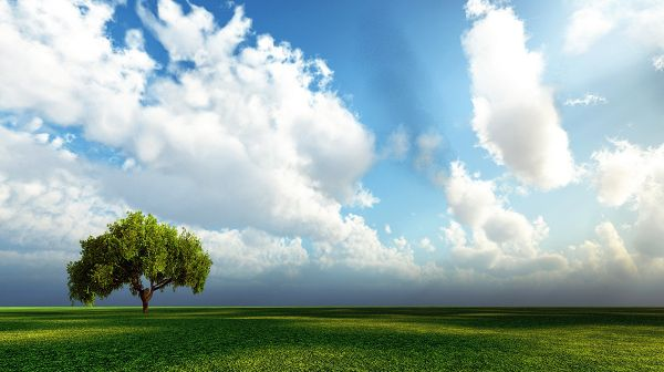 click to free download the wallpaper--best landscape photography - An Endless Green Field, the Blue and Cloudless Sky, a Tall Tree in the Stand