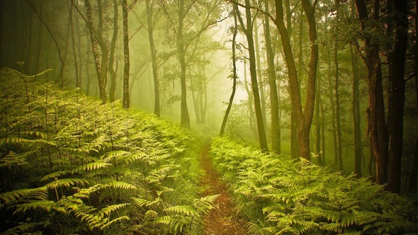 2015 HD Eye Protection Picture Wallpaper(7): bush with sunshine in forest