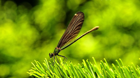 2015 HD Eye Protection Picture Wallpaper(10): macro mode of dragonfly