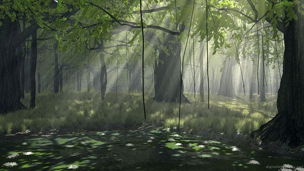 free nature photos - The Weakening up Forest, With Sunshine Breaking in, Another Good New Day