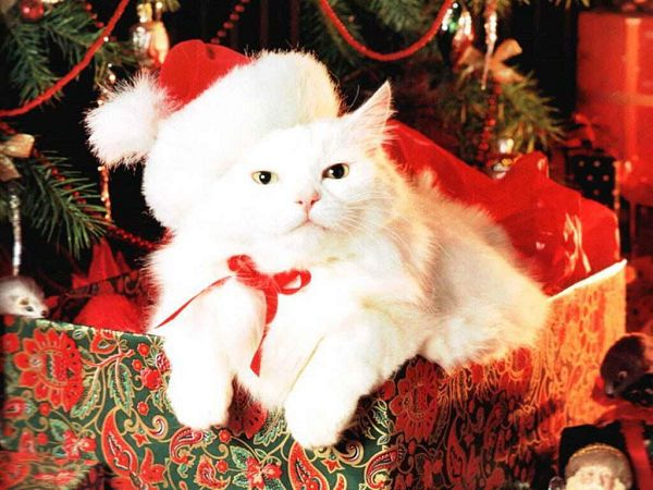 free wallpaper: a lovely cat on Christmas  ,click to download