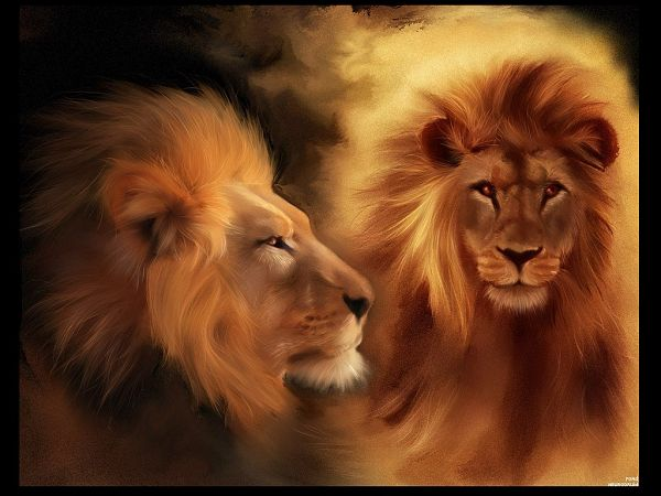 Free Wallpaper About Animals: Two Lions With Sharp Eyes