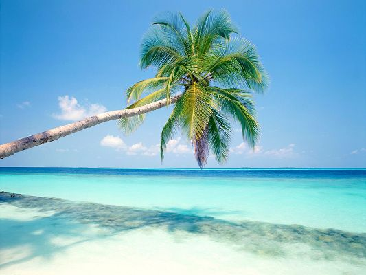 free wallpaper of Tropical Island-blue sea and pretty coconut tree,click to download