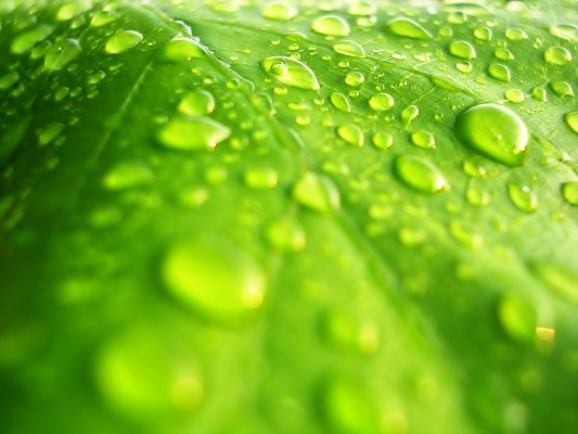 free wallpaper of a high resolution photo-a green leaf  ,click to download