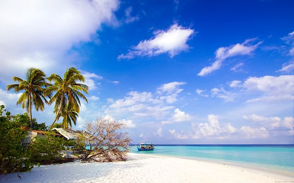 free wallpaper of beach:  HD Sky Blue Beach ,click to download