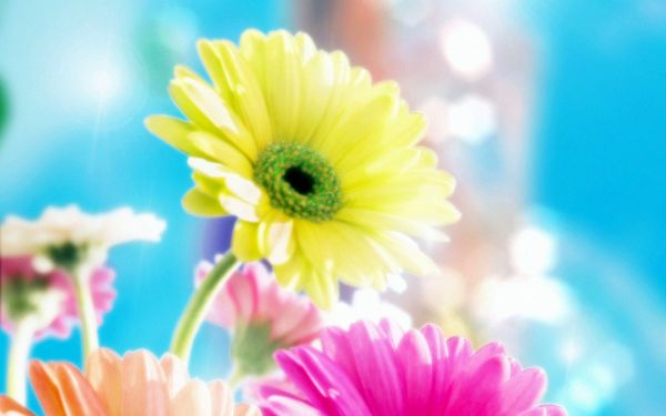free wallpaper of colorful charming flowers,click to download