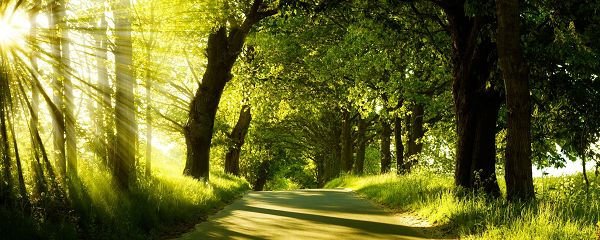 free wallpaper of natural scenery - forest in the morning,click to download