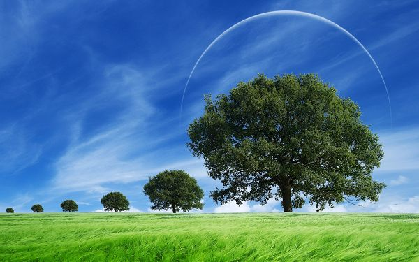 free wallpaper of natural scenery: green grass waving with the wind ,click to download
