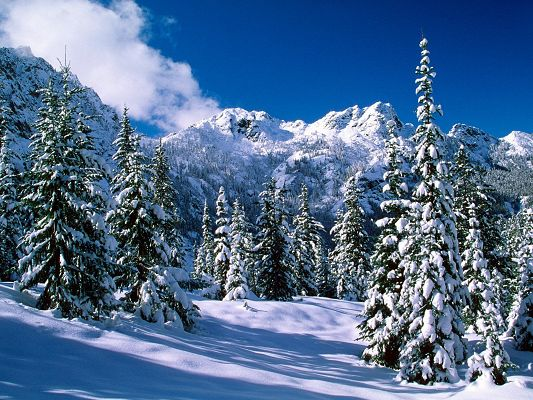 Free Wallpaper Of Natural Scenery Of Snow