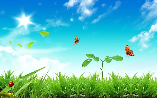 free wallpaper of natural scenery: three ladybirds flying in the grass  ,click to download