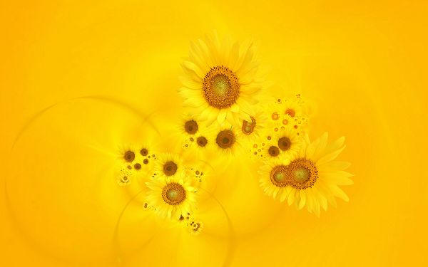 Free Wallpaper Of Sunflowers
