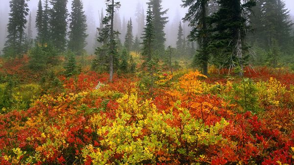 click to free download the wallpaper--images of natural scenes - Misty Distant Scene, Leaves Are Red, Yellow and Green, Colorful Scene